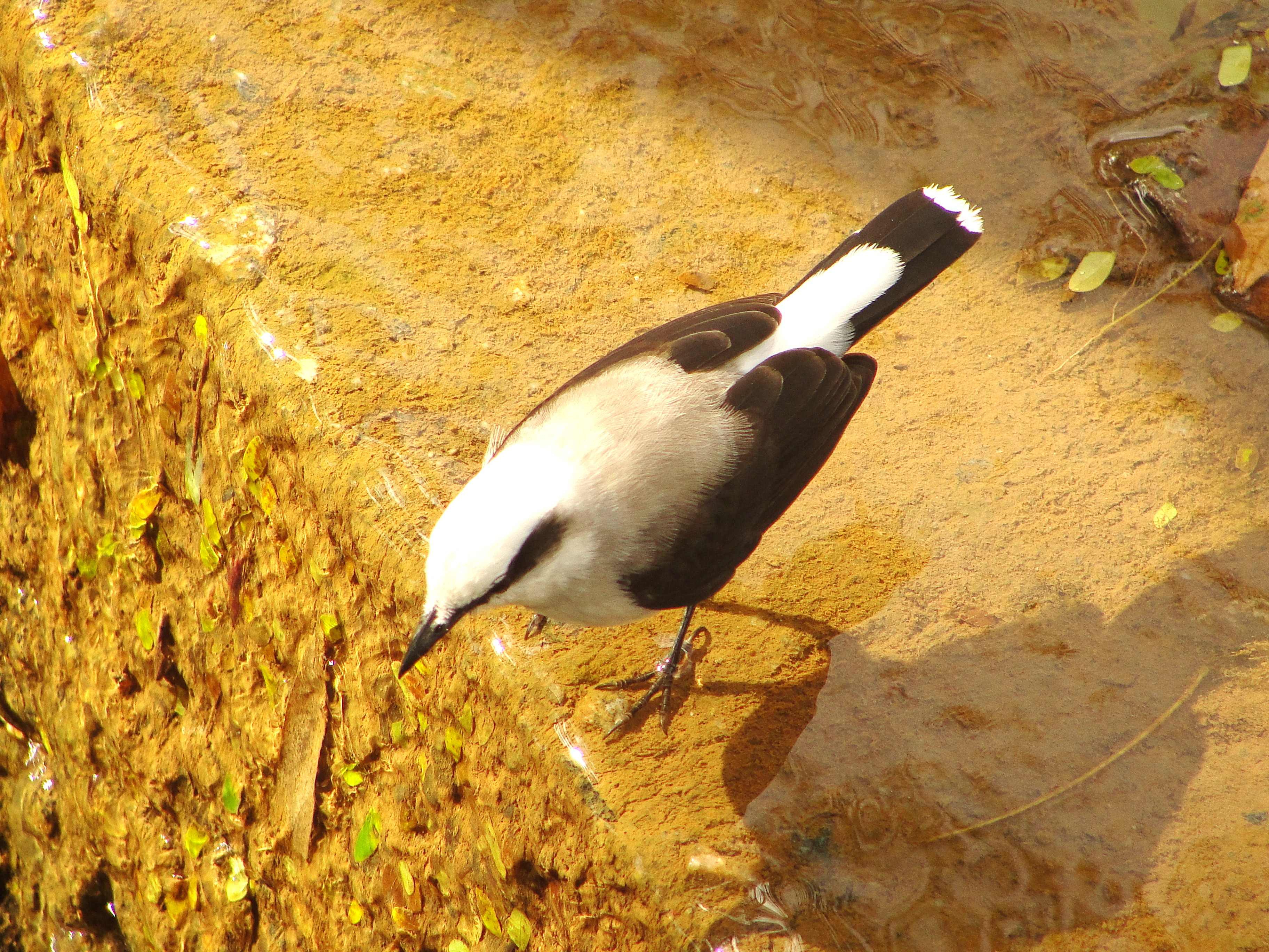 Duas centenas de espécies de aves voam pela ESALQ