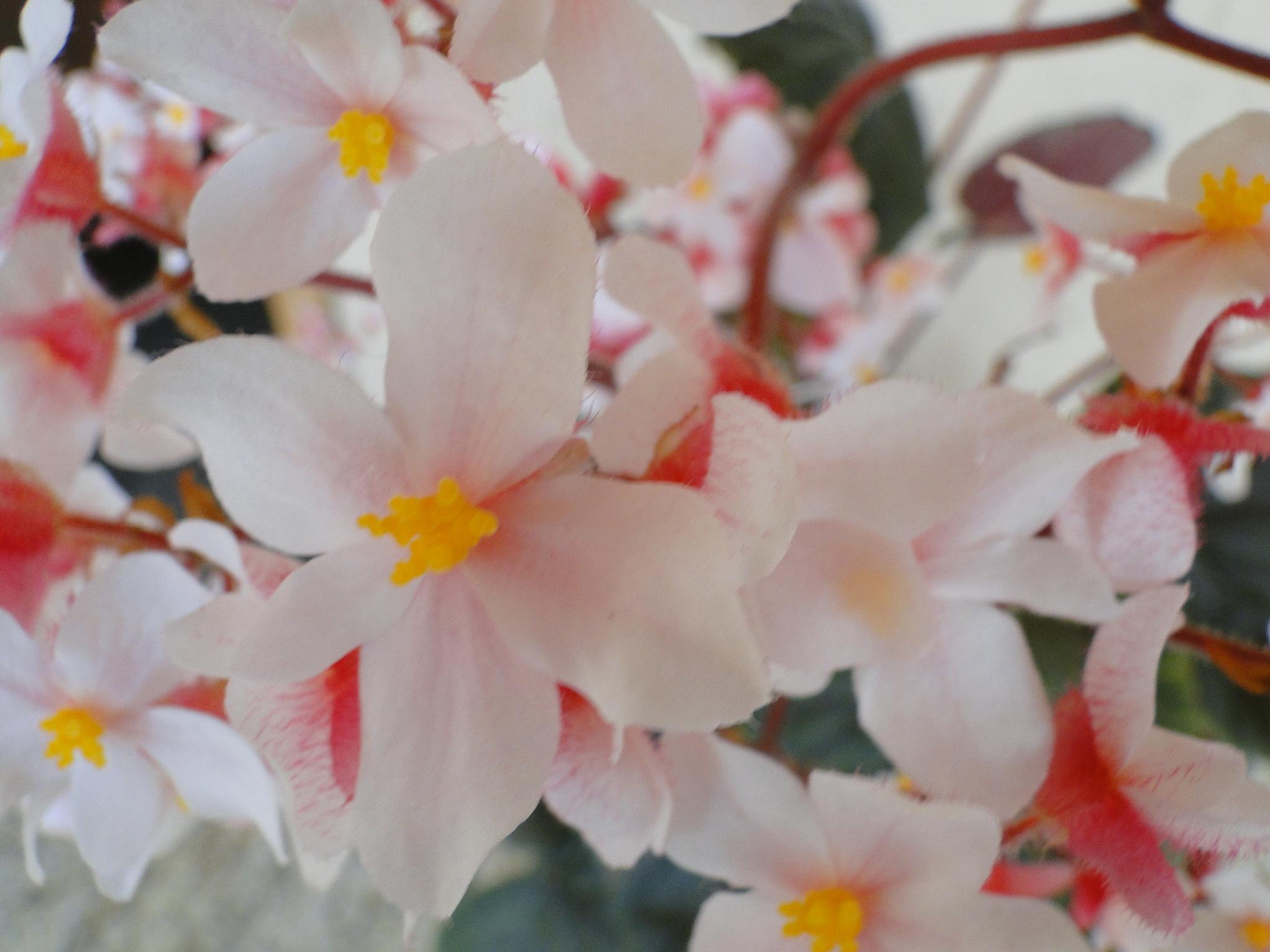 A primavera chegou? – por Zilma Bandel