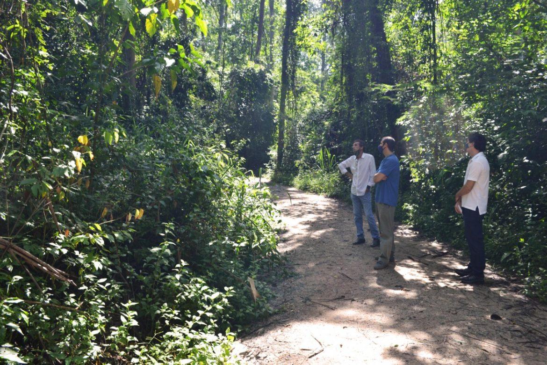 Piracicaba mais verde: cidade será contemplada com plantações do projeto Corredor Caipira