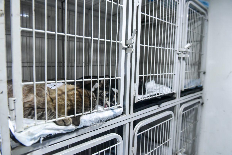 Relato de uma médica veterinária sobre a cruel situação dos animais em tempos de pandemia